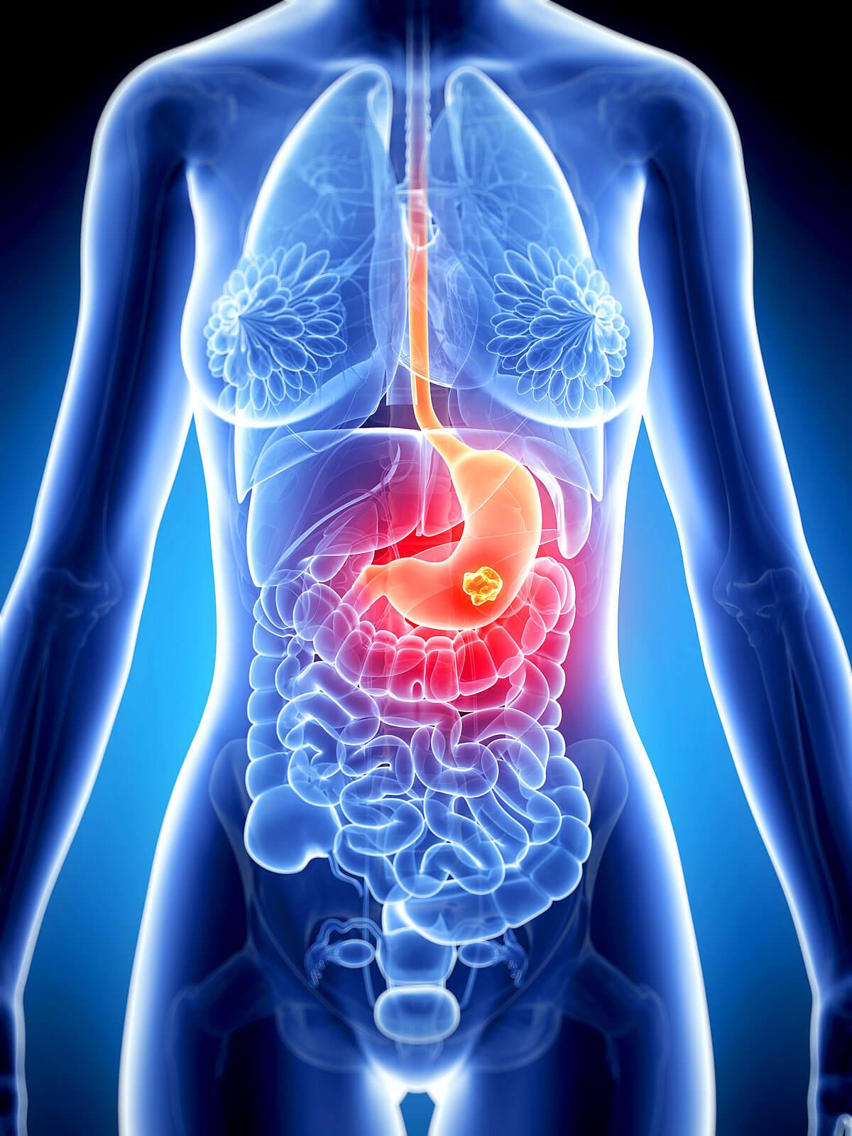 Lage des Magens im menschlichen Körper