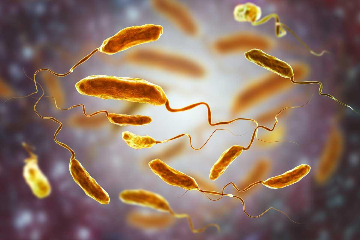 Bakterium Vibrio cholerae